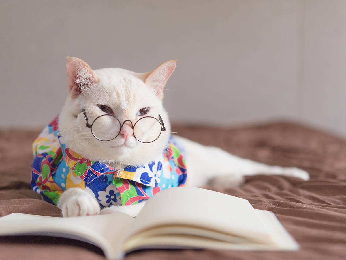 How to be witty - a funny cat with glasses.