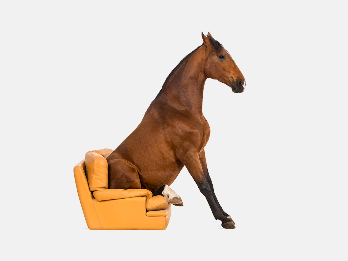 The best horse jokes and horse puns.