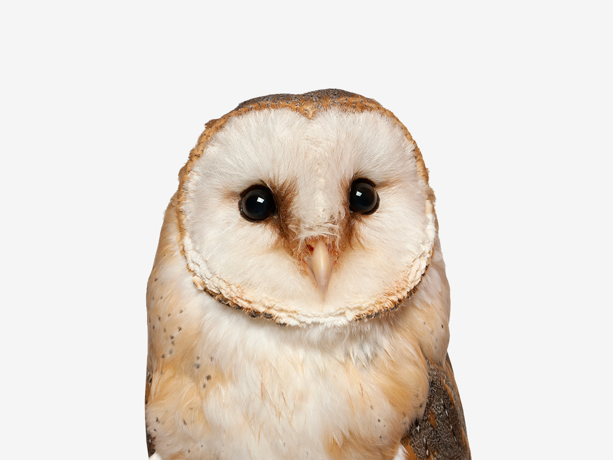 The funniest owl jokes collection.