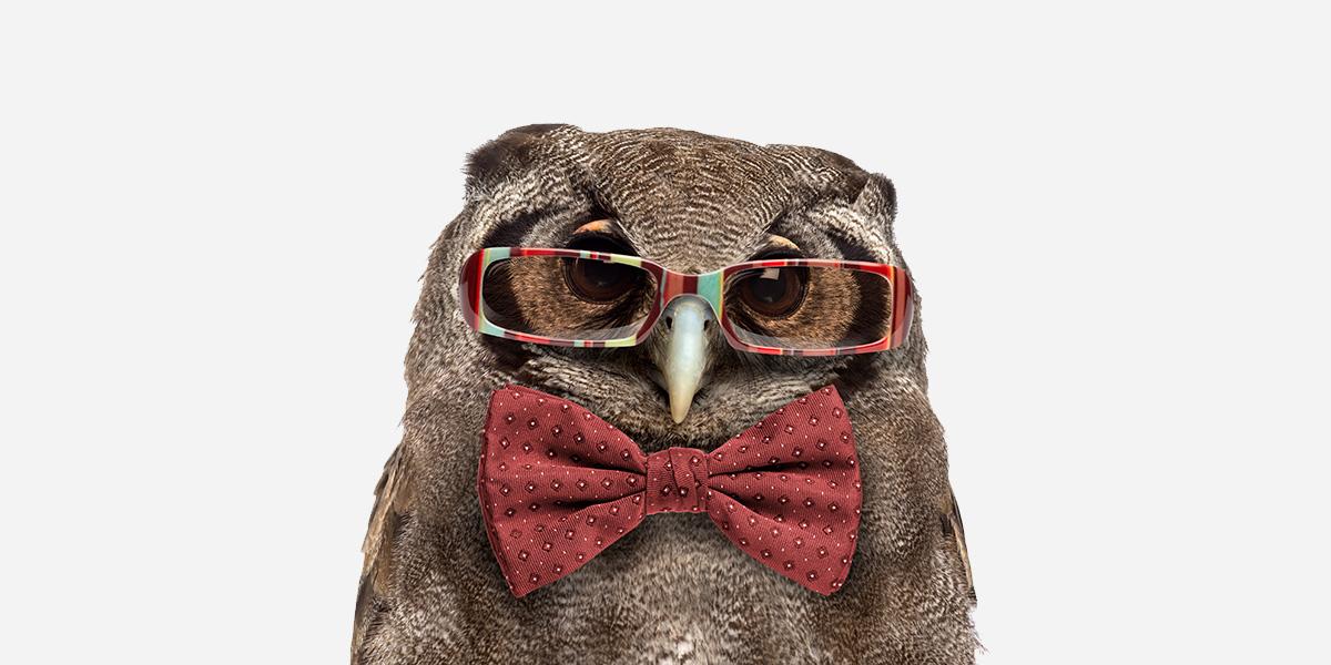 Owl jokes and puns.