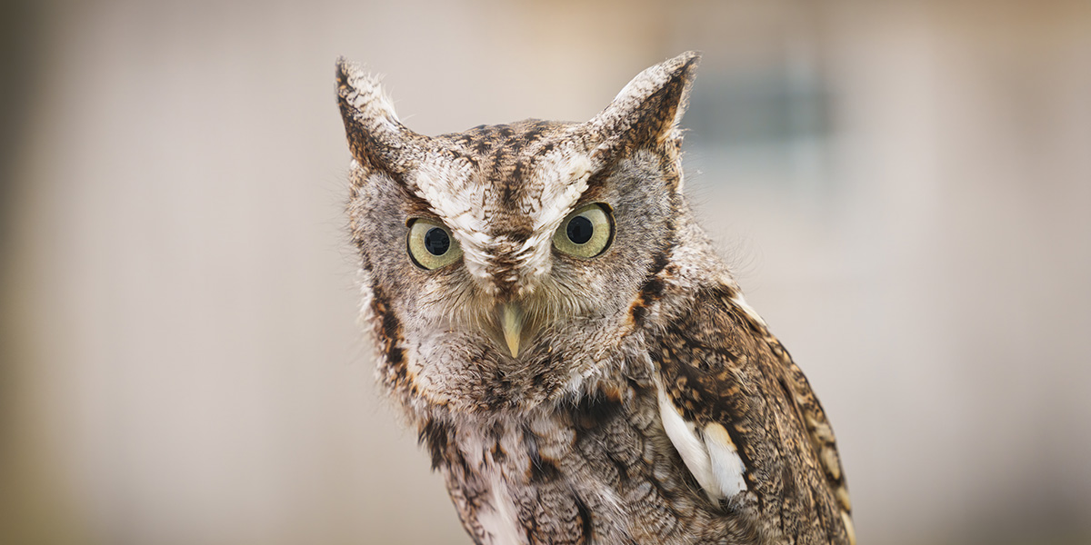 What is the funniest owl pun?