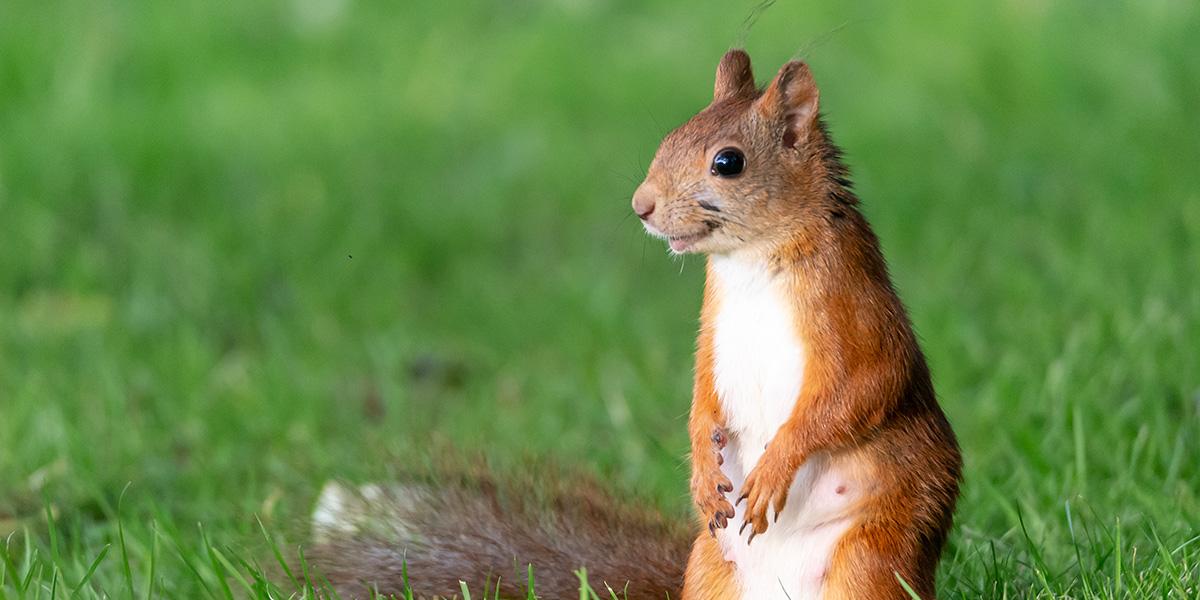 Squirrel Puns